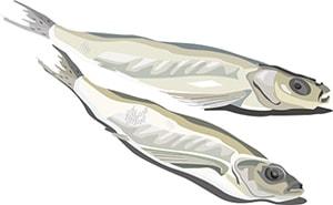 Вяленая рыба из Сибири